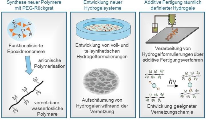 Die Entwicklungskette umfasst die Syntheseentwicklung funktioneller Polymere und Vernetzer, die Weiterentwicklung von Vernetzungschemie, die Formulierung von Hydrogelen für den 3D-Druck und deren Verarbeitung zu räumlich definierten Hydrogelen über den 3D-Druck. (c)